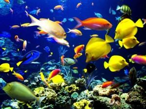 pesci-coloratissimi-nella-grande-barriera-corallina